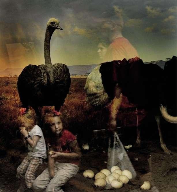 «Ostrich».