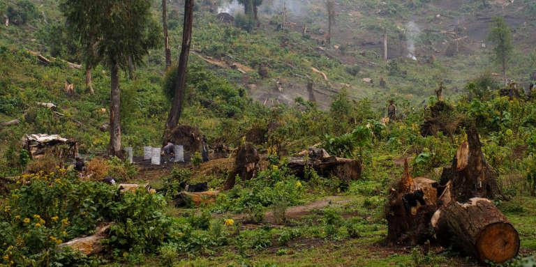 La production de charbon de bois est une des premières causes de déforestation en République démocratique du Congo.