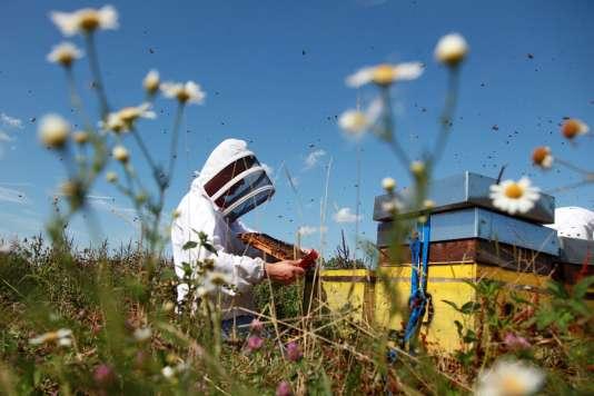 Le Parlement a interdit les insecticides néonicotinoïdes, nocifs pour les abeilles,à partir du 1er septembre 2018, avec des dérogations jusqu'en 2020.