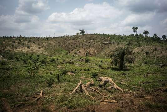 Deforestation pour planter des palmiers à huile dans la forêt de Lofa au Nigeria le 28 avril 2016.