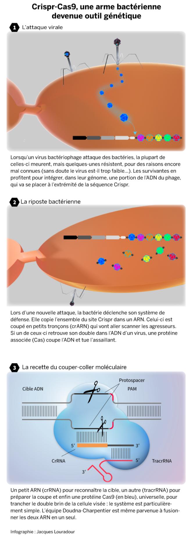 Infographie: Crispr-Cas9, arme bactérienne devenue outil génétique