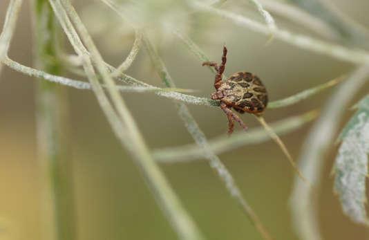 Mal détectée, la borréliose de Lyme, qui touche au moins 27 000 personnes par an en France,peut entraîner douleurs, arthrites ou atteintes neurologiques à long terme.