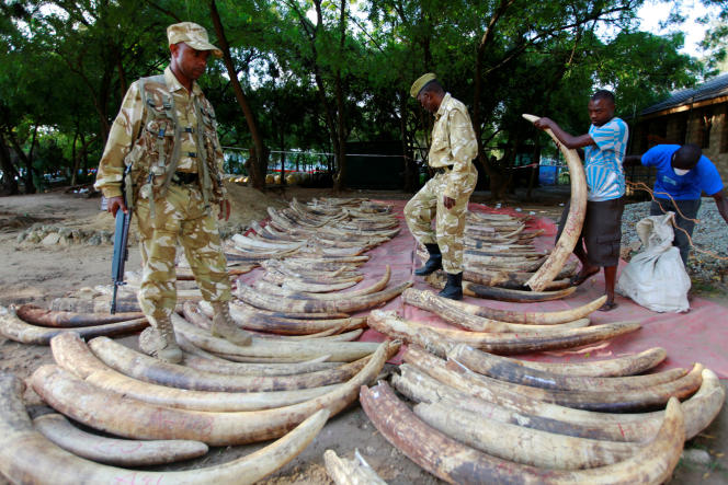 Saisie d'ivoire par des rangers àMombasa, au Kenya, le 22 juillet 2016.