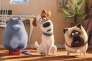 « Comme des bêtes», film d'animation américain de Yarrow Cheney et Chris Renaud.