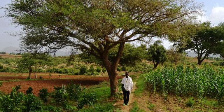 A Abrha We Atsbeha, orangers, avocatiers et manguiers sont couverts d'ombre par d'immenses acacias. Ces arbres fixateurs d'azote, qui fournissent des gousses pour alimenter le bétail, ont été plantés par les fermiers.