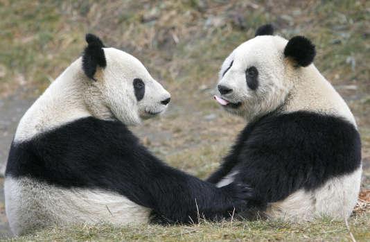 Discussion de pandas.