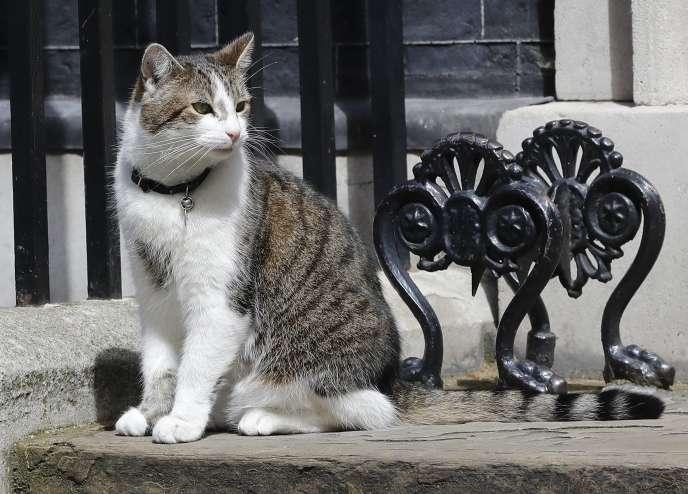 Les chats sont eux aussi vulnérables au dioxyde d'azote, aux particules fines et aux hydrocarbures ; en particulier les asthmatiques.
