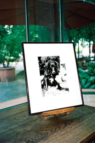 La photo d'un chien truffier.