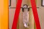 «Mister Fuzzypants», le gros matou dans « Ma vie de chat», de Barry Sonnenfeld.