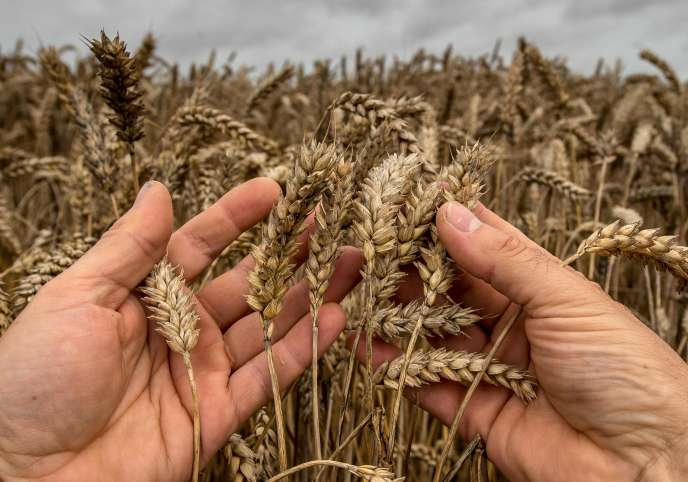 Le résultat net par actif non salarié a baissé de près de 22 % par rapport à 2015 et la valeur brute de la branche agricole de 8,4 %.