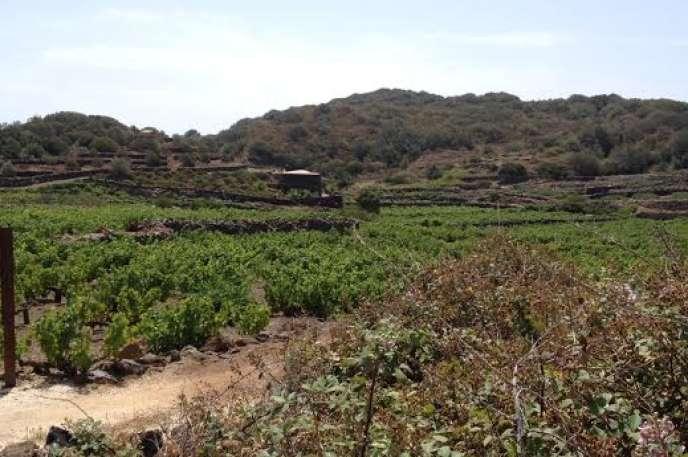 Les vignes de zibibbo et le dammuso– maison en lave à coupole– de Carole Bouquet, à Pantelleria.