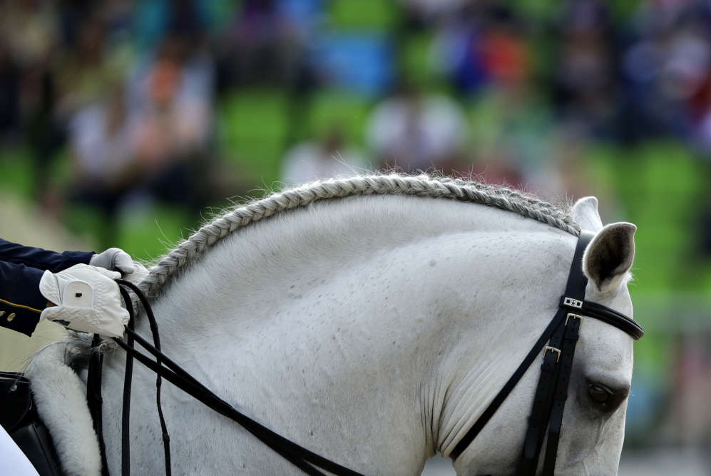 La crinière tressée du cheval Xama Dos Pinhais, monté par le cavalier brésilien Joao Victor Marcari Oliva lors de l'épreuve de dressage le 11 août.