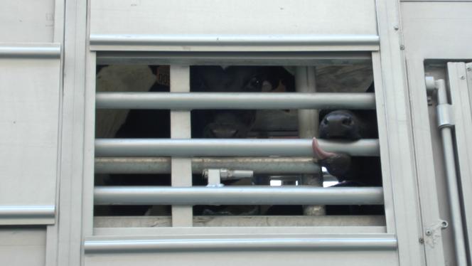 Les animaux voyagent dans des espaces confinés