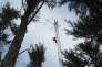 Une des cinq tours en acier qui culminent au-dessus de la canopée de la forêt de Harvard, à 30 mètres du sol. L'une d'elles porte 90 000 euros de matériel.