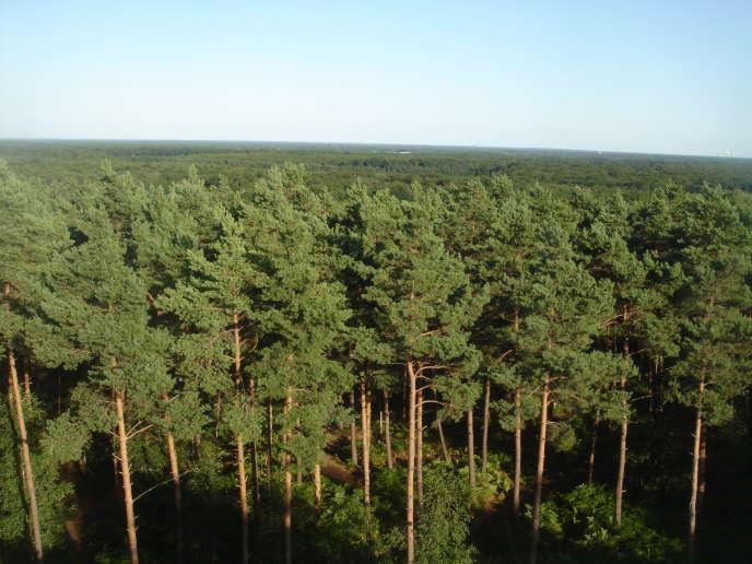 La forêt d'Orléans depuis l'observatoire des Caillettes, à Nibelle (Loiret).