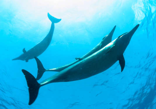 Les grands animaux marins sont plus menacés que les petites espèces.