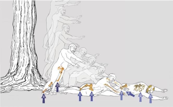 Schéma décrivant la chute de Lucy et les différentes fractures engendrées sur son squelette.