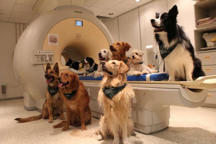 Les chiens devant l'appareil à IRM
