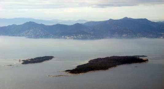 La raie-papillon, espèce très rare en Méditerrannée, a été pêchée au large des îles de Lérins, près de Cannes.