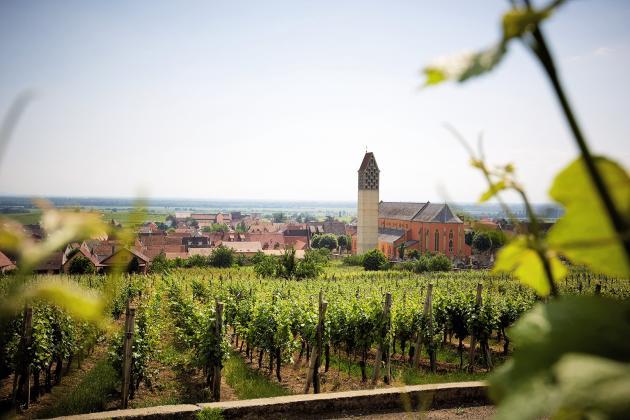 En Alsace, la Cave des vigneronsde Pfaffenheim est l'une des coopératives les plus cotées.