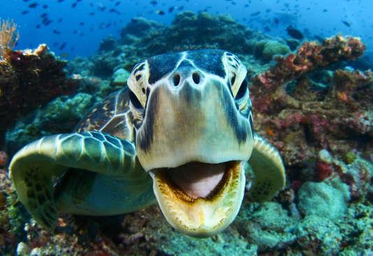 Les visiteurs sont invités à prendre soin des fonds marins et des espèces qu'ils abritent.