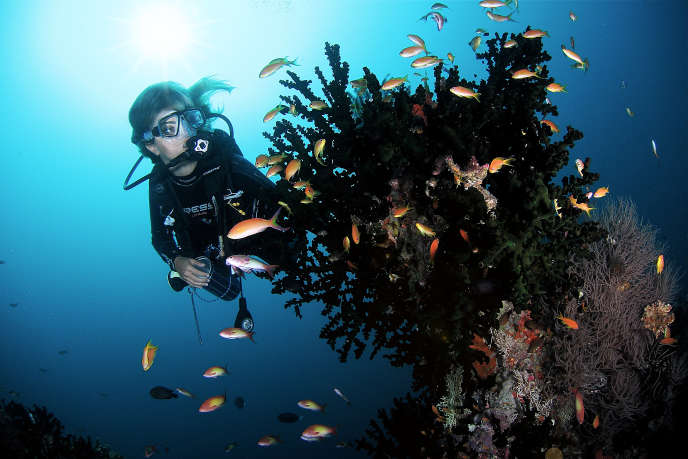 Plongée avec bouteille aux Maldives.