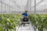Une division de Monsanto Co. à Bergschenhoek aux Pays-Bas le 7 juillet.