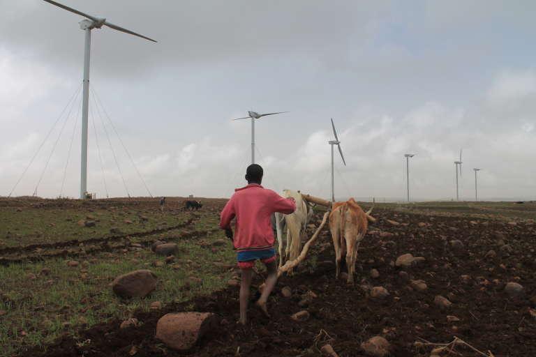 Un champ d'éoliennes à Ashegoda en Ethiopie
