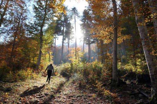Dans la forêt de Vizzavona, en plein cœur de la Corse, le 1er novembre 2015.