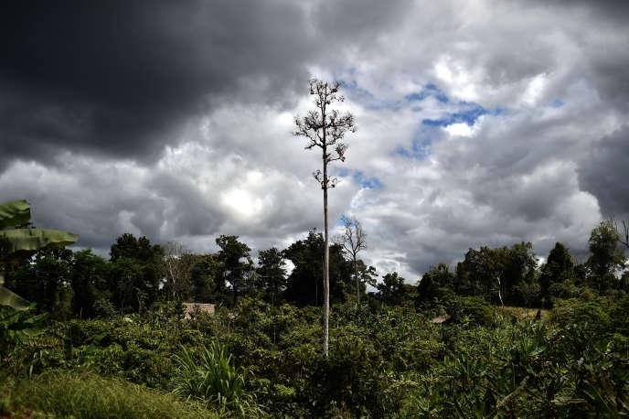 La jungle de la Papouasie-Nouvelle-Guinée, le 9 septembre 2014.