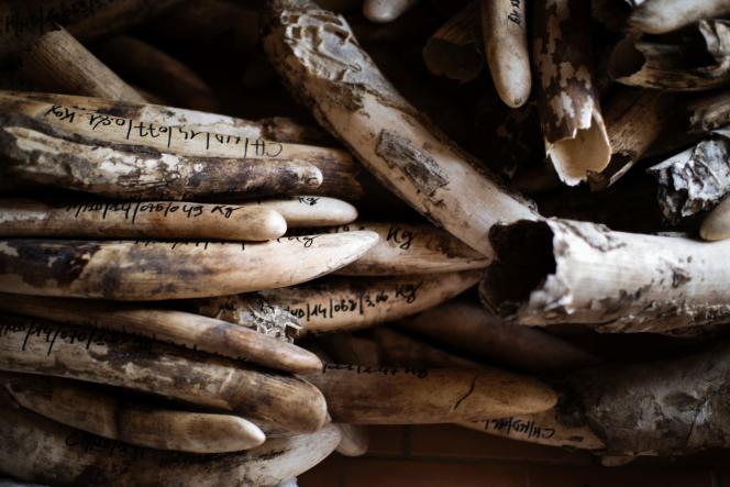 Le Zimbabwe et la Namibie ne pourront pas plus vendre à l'étranger leur ivoire confisqué lors de saisies ou prélevé sur des carcasses pour financer des programmes de protection.