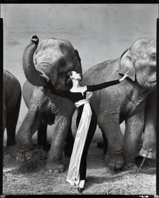 «Dovima et les éléphants, robe du soir Dior, Cirque d'hiver, Paris, août1955.»