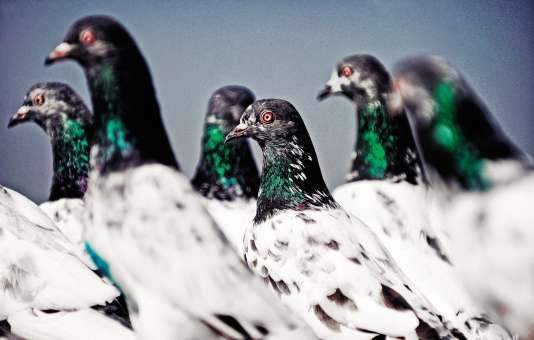 L'un des pigeons arrêtés début octobre par la police indienne portaitune lettre de menaces directement destinée au premier ministre Narendra Modi.