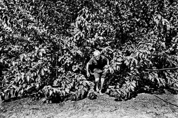 Dans la région de Gallipoli,l'un des épicentres de la maladie, tous les oliviers de l'exploitation de Tonino, 82 ans, se meurent. Depuis qu'il ne vend plus d'huile d'olive, le retraité, dont la pension s'élève pour lui et son épouseà 600 euros, cultive des légumes pour survivre.