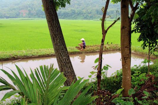 Dans la province de Huo Binh, au Vietnam.