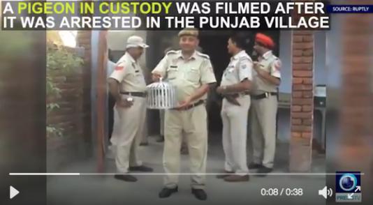 Les images de l'arrestation du pigeon soupçonné de terrorisme.