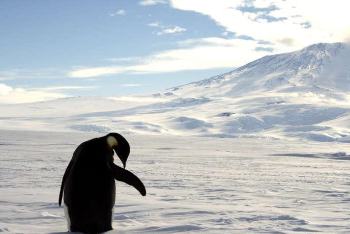 Un manchot empereur sur l'île de Ross (mer de Ross), en décembre 2006.