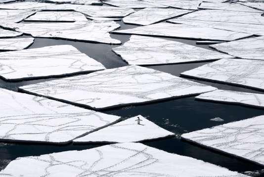 Un manchot Adélie sur la mer de Ross.