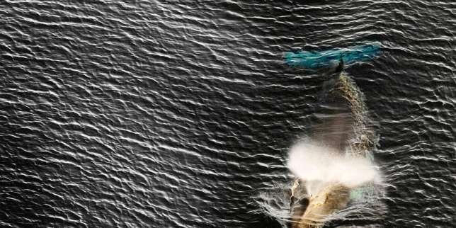 pourquoi-les-japonais-pêchent-encore-des-baleines-(alors-qu'ils-n'en-mangent-presque-plus)