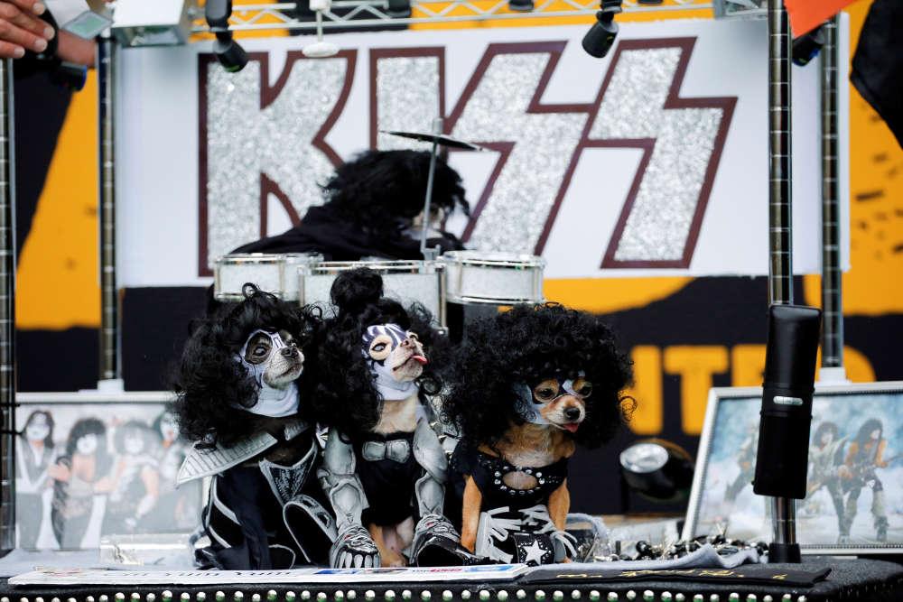 Des chiens habillés à la manière du groupe de rock Kiss prennent part à la parade annuelle des chiens d'Halloween, au Tompkins Square Park de Manhattan à New York, le 22 octobre.