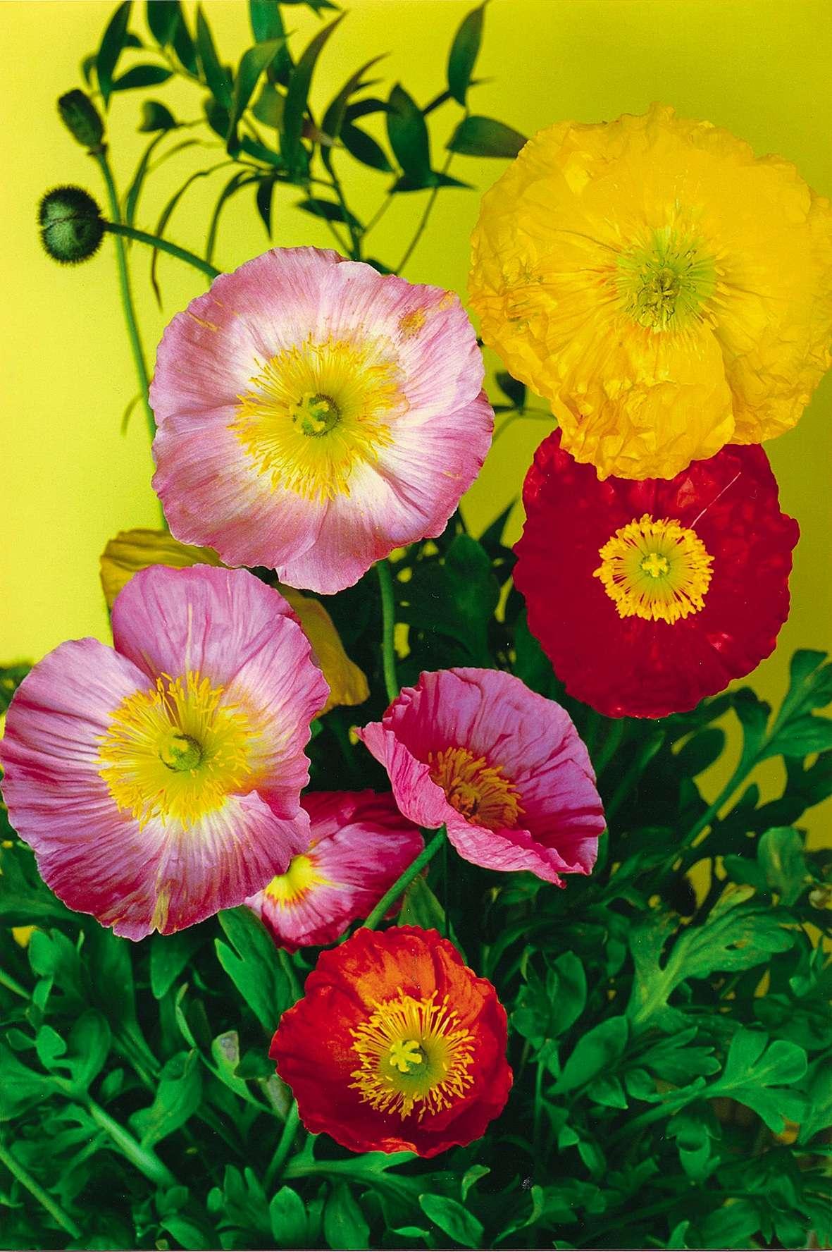 « Flowerpicture # 56».