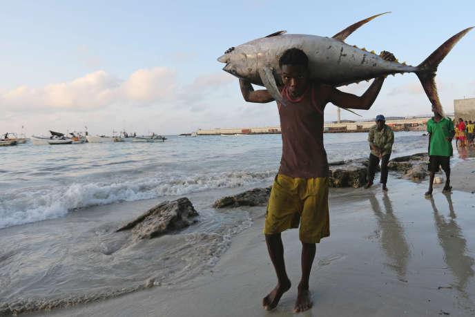 Un pêcheur somalien a sorti sa prise de son bateau. Plage du Lido, Mogadiscio, 4 novembre 2016.