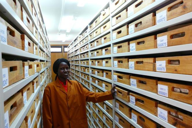 Ann Wavinya, archiviste des sols d'Afrique au Centre international pour la recherche en agroforesterie (ICRAF), à Nairobi.