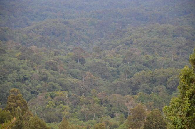Forêt de Kereita, au Kenya.Les formations boisées, qui couvrent 30 % de la superficie des terres émergées, soit près de 4 milliards d'hectares, jouent un rôle crucial dans la régulation du climat.
