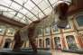 Un Giraffatitan virtuel« exposé» au Musée d'histoire naturelle de Berlin.