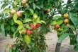 Dans ses vergers, la société pomologique du Berry sauvegarde de nombreuses espèces de pommes anciennes et rustiques. Une initiative visant à protéger et à favoriser la biodiversité.