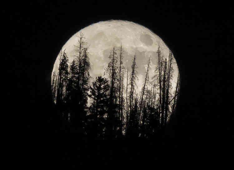 Les silhouettes des arbres du Summit Sky Ranch se découpent sur la Lune à Silverthorne, dans le Colorado.