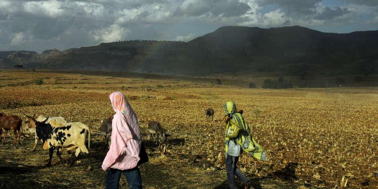 Des bergers éthiopiens, dans le nord du pays.