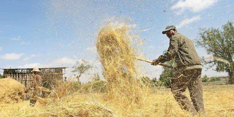 Un fermier dans la région d'Oromia, en Ethiopie.