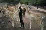 Photographie tirée de la série« Amelia and the Animals» représentant la fille de la photographe Robin Schwartz.
